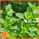 Real Flavors - Mint Flavour Concentrate